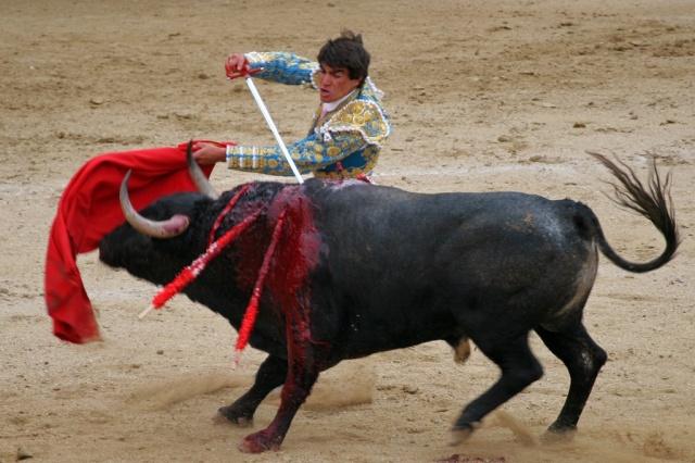 bull3